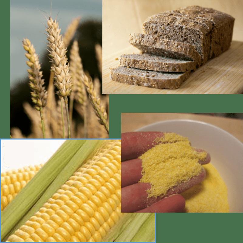 Wheat, wheat bread, corn, corn meal
