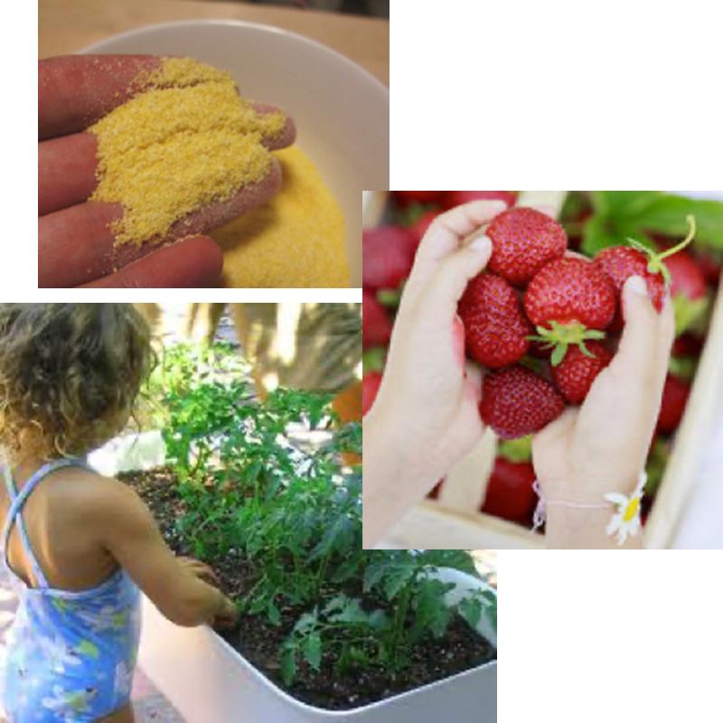 Corn meal, strawberries, herbs
